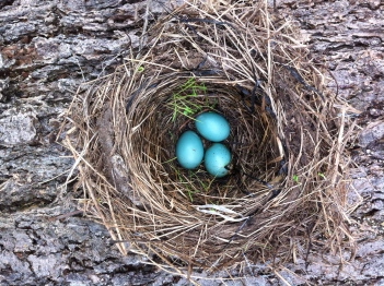 my full nest