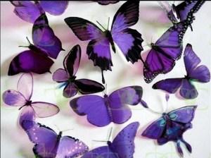 Purple-Butterflies-butterflies-17473487-1024-768